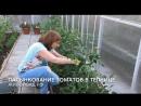 Пасынкование томатов 3 часть