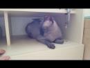 Вся правда о лысых котах канадский сфинкс