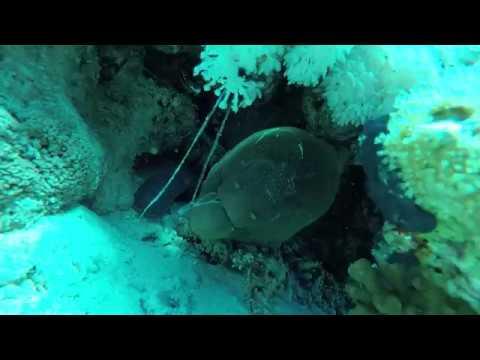Говорящая Мурена. Muraena. Рыба которая говорит. Голос Мурены.Египет.Шарм-эль-Шейх.Дайвинг.Egypt