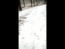 Амур по прыгун)