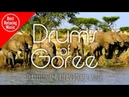 Traditional African Djembe music - Drums of Goree (aboriginal music)