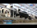 В Маслянинском районе после реконструкции открыли большую молочную ферму
