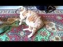 Пугливые коты и кошки, подборка, смешные коты