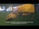 История о том, как оливковая черепаха Эльза нашла свой новый дом!