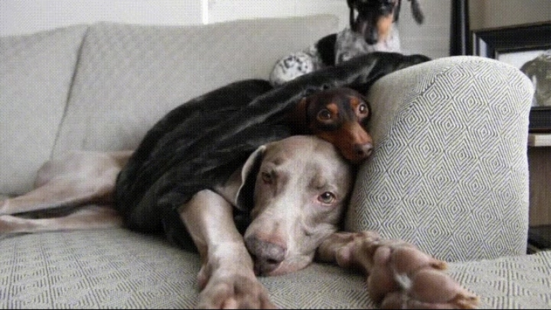 Собачья башня😁