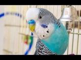 Обзор клетки моего волнистого попугая