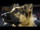 Freiburg Junger Syrer verletzt Polizist mit Kopfstoß Diensthund verteidigt Herrchen