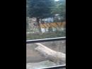 Сафари в корее