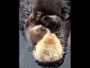 После просмотра данного видео ещё скажите, что у Животных нет чувств.
