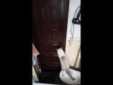 Кот Бакс  сам открывает дверь