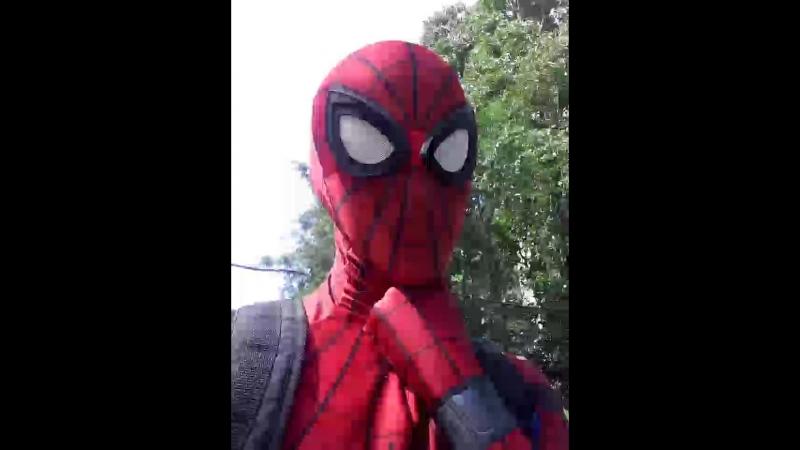 паук на линейке