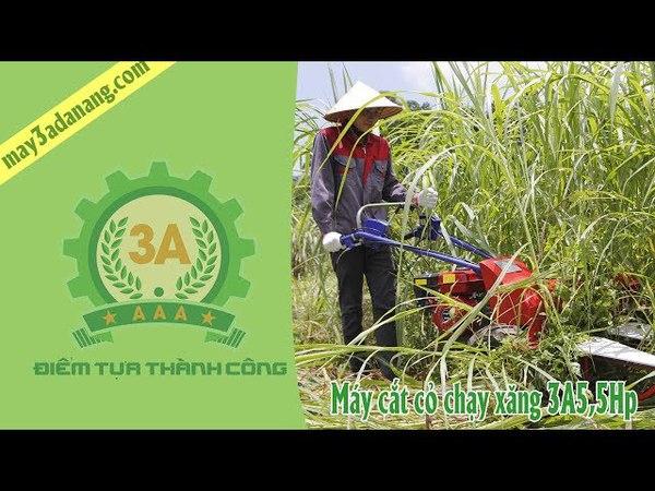 Máy cắt cỏ chạy xăng 3A5,5Hp || Máy cắt cỏ voi cho bò mini