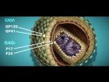 ВИЧ и СПИД. Все самые интересные факты о ВИЧ.