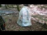 банька в лесу