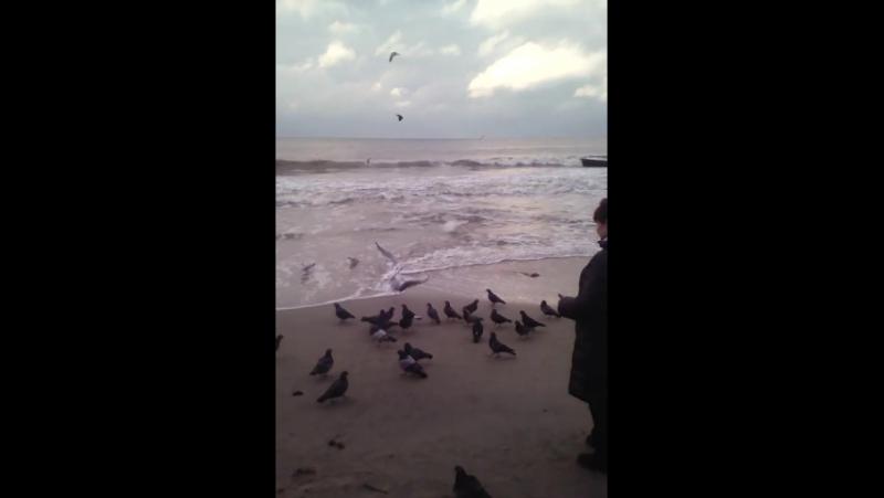 мама кормит птиц