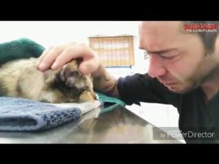 Мужчина прощается со своей умирающей кошкой, с которой он прожил 13 лет