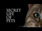 Тайная жизнь домашних питомцев 1 серия  Secret life of pets