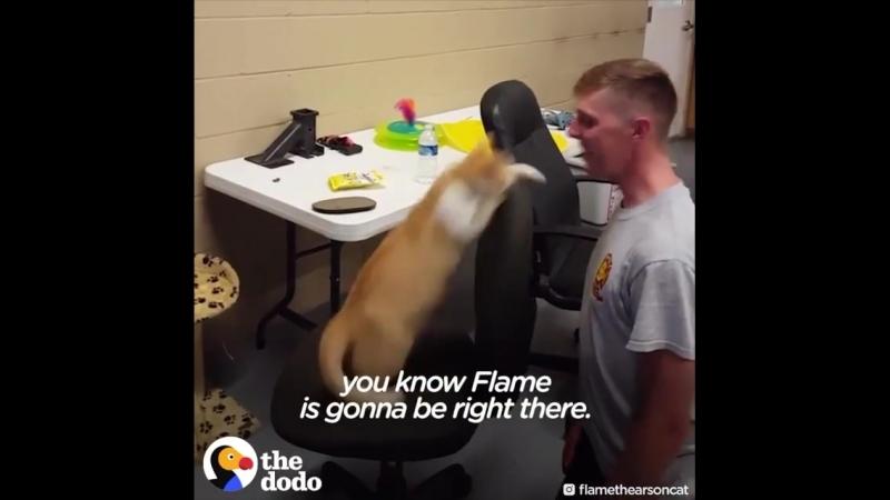 Мировая практика. Больше видео в группе Dingo