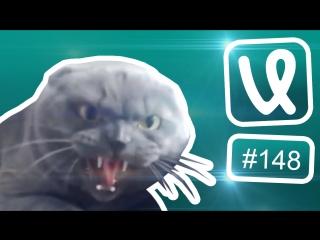 Лучшие ролики недели #148 Как голосовать на выборах?