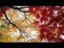 Осенний блюз. – Золотой саксофон - Autumn Blues. – Golden Saxophone • ВидеоКанал «exZotikA Max»