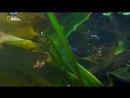 National Geographic Битва болотных драконов / Battle of the Swamp Dragons 2017, Документальный, природа, флора, фауна, HDTVRip