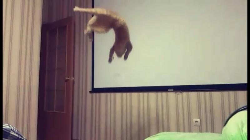 Котовий с Котовийштрассе учится летать