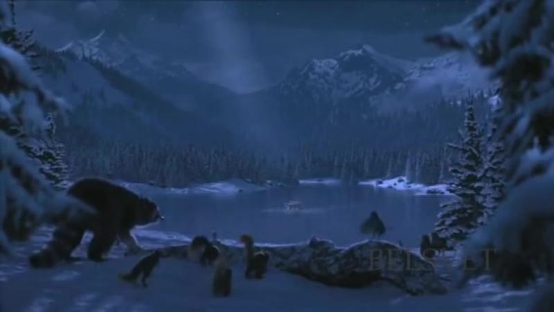 мишки на льду