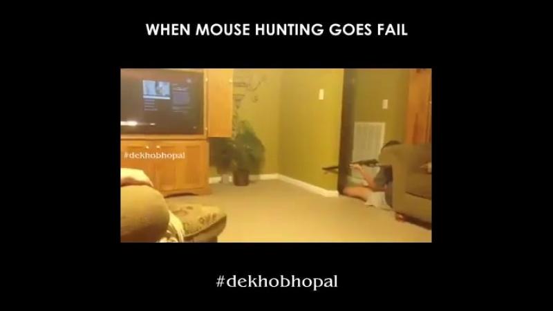 Охота на маленького мышенка!