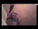 кошка-бомба