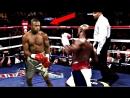 Scientific Studies Prove This Is The Best Boxer Ever!؟