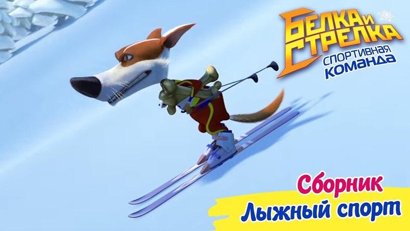 Белка и Стрелка. Спортивная команда - Сборник серий про Лыжный спорт | Поучительный мультфильм