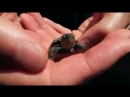 Беговая дорожка для черепахи