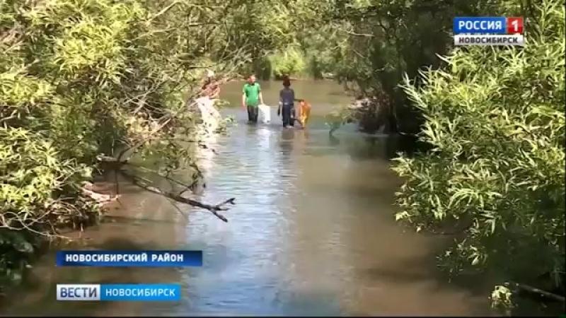 Новосибирские волонтеры продолжают очищать реку Издревая