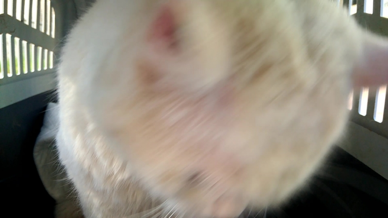 Коржик белый из Самарово