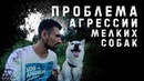 Проблема агрессии собак мелких пород их хозяева