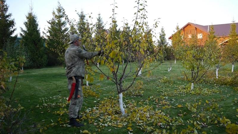 00156 Liapchev_Malus_pruning Осенняя обрезка яблони. Владимир Ляпчев обрезкаяблони