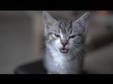 Мой кот, когда был маленький)