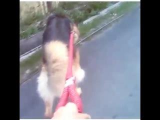 - doglover ( 640 X 640 ).mp4