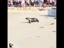 R/етранслятор, [07.07.18 15:35] [ GIF ] r/AnimalsBeingBros Морского льва выпустили на свободу, но он вернулся за своим братишкой