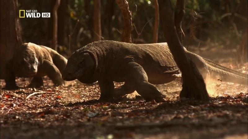 Ядовитый остров. National Geographic. 2012. HD