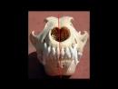Зубы собаки. Сколько зубов у собаки Молочные зубы у собак