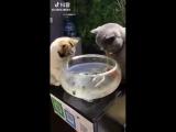 Не трогай моих рыб