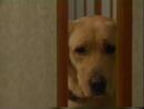 Т/С Злоключения Росинанта, моей любимой собаки 5 серия 2001г