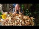 Большой урожай грибов принесёт дождливая погода в Подмосковье