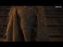Слоненок в колодце
