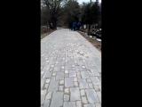В центре Ульяновска в парке Дружбы Народов зарезали барана