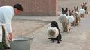 ПОПРОБУЙ НЕ ЗАСМЕЯТЬСЯ - Смешные коты и другие Животные до слез, Cute Cats 101