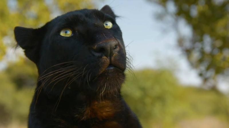 Meet The Leopards! | The Lion Whisperer