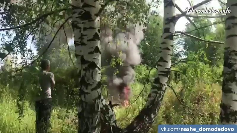 В Домодедовском лесу металлоприемка обжигает кабель