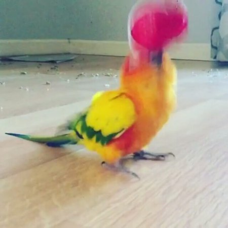 "BirbBORBBLORB on Instagram ""Waiting for the weekend be like 😩 Tag a 🍻 friend @cheeto_puff_510 🔊 🔹 🔹 🔹 🔹 🔹 bird birb birdmemes birdmeme bir..."